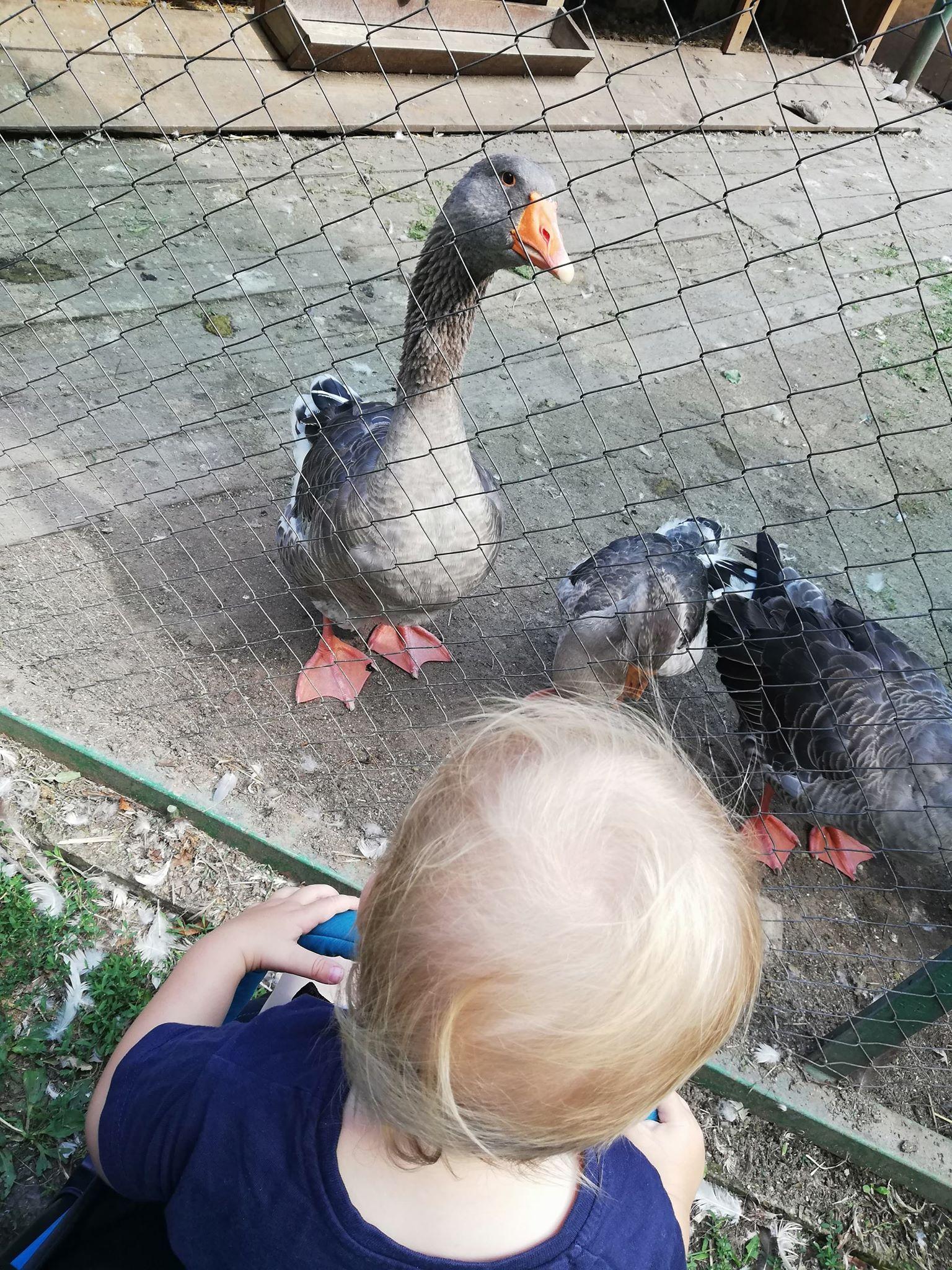 zoo-oradea-gaste